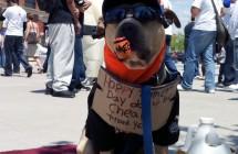 Dog NY Mets